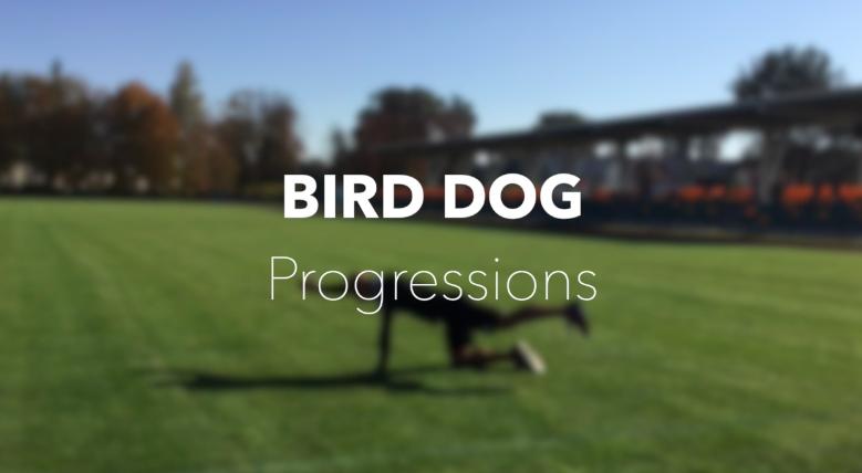 Pies gończy – progresja