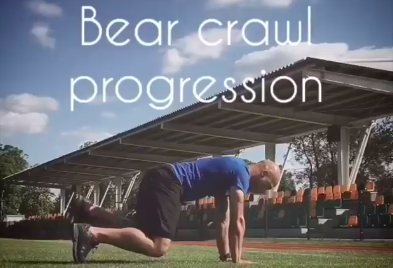 Niedźwiedź – progresja
